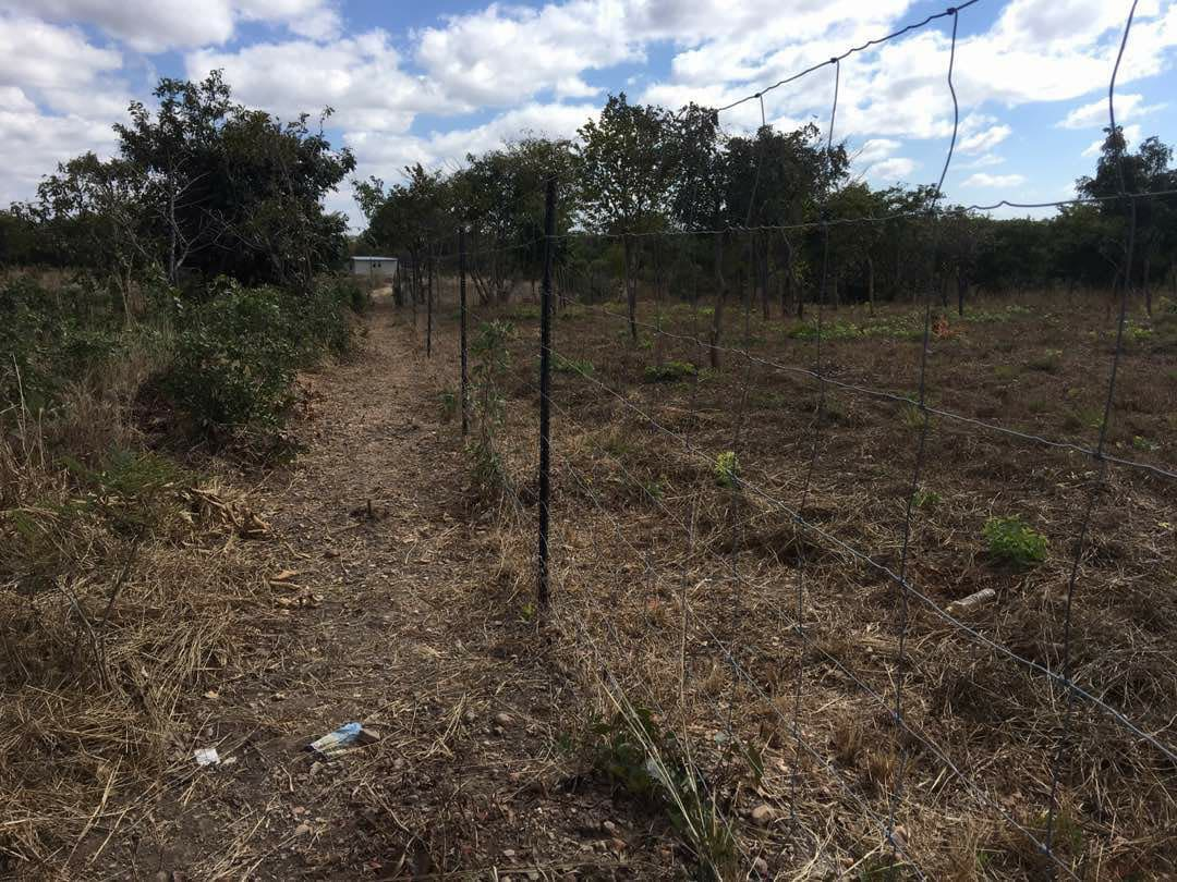 Land For Sale In Mapepe Chilanga