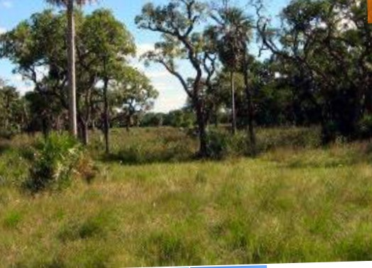 18.1 Hectares Of Farm For Sale In Mungwi