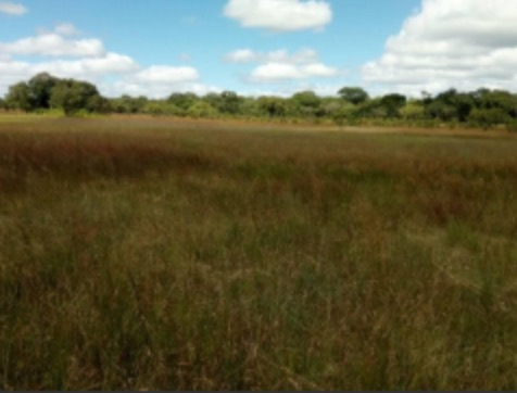 Land For Sale In Mkushi