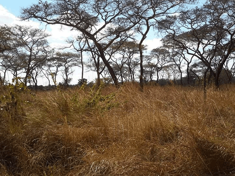 100 Hectares Available for Sale in Chisamba