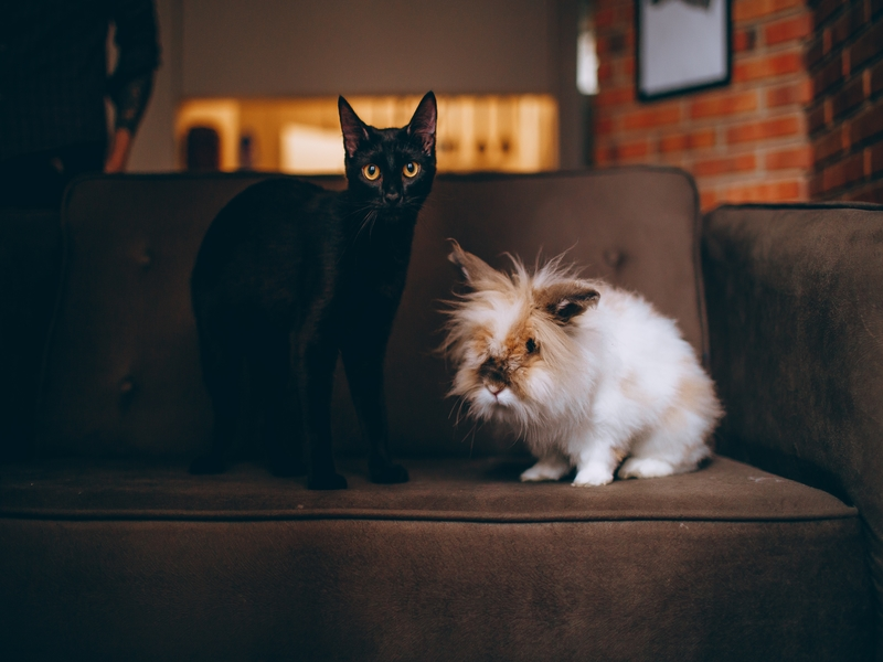 Considerations for allowing pets in your rental property